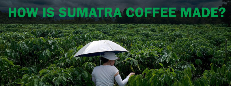 How is Sumatra Coffee Made