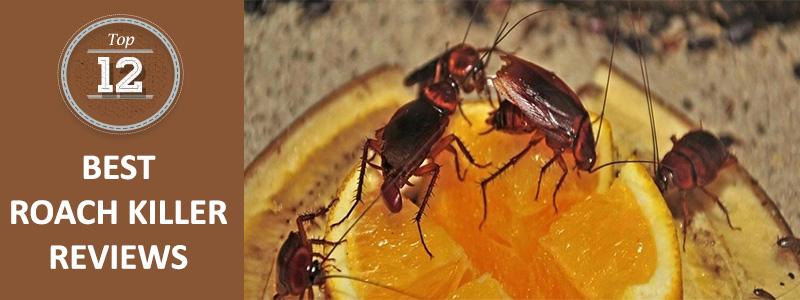 best roach killers
