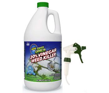 Green Gobbler Vinegar Weed