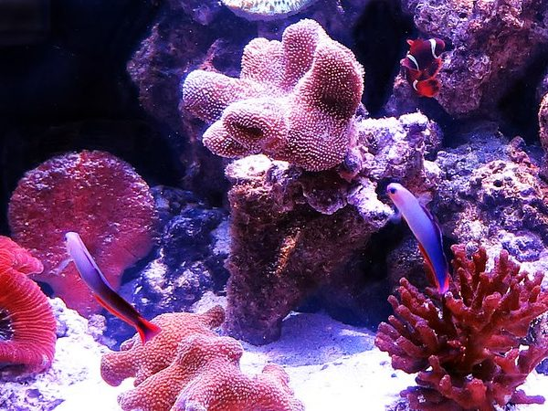 Lighting For Your Reef Tank